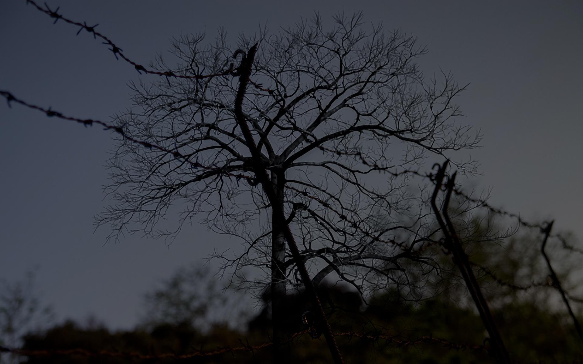 【シリーズ・都市伝説】呪いの巨木「泣く木」