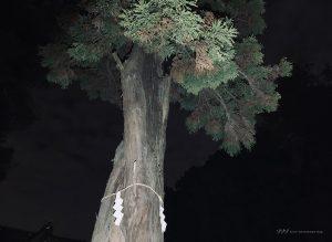 【シリーズ・心霊スポット】八坂神社(東京)