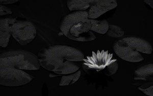 【シリーズ・都市伝説】嫁いびりの果てに「嫁殺しの池」